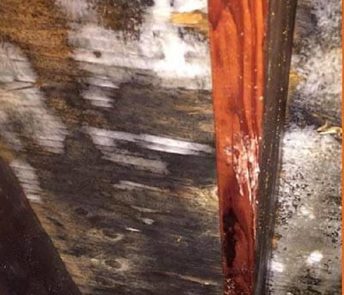 Leaky Roof Causes Moldy Concern Before
