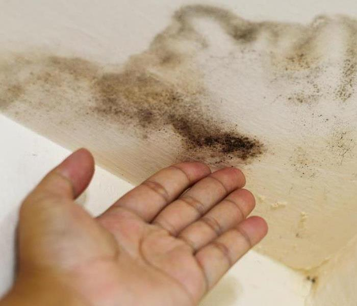 Mold and Mildew in home