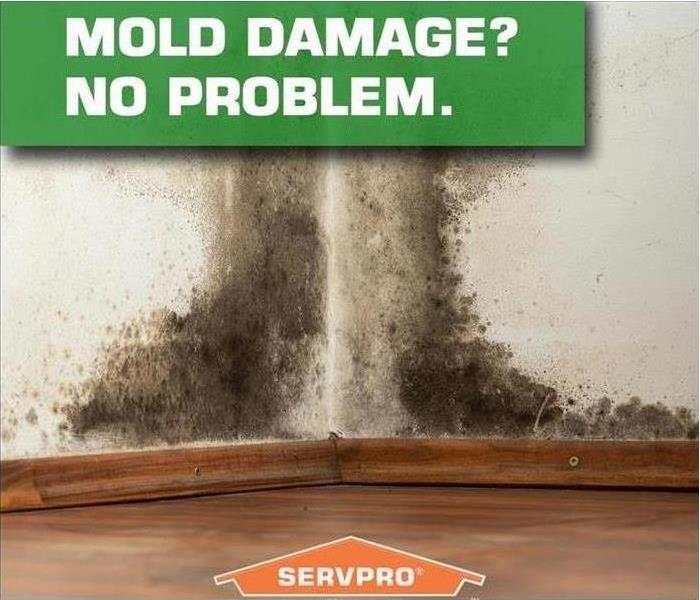 Corner of a room with mold and SERVPRO logo