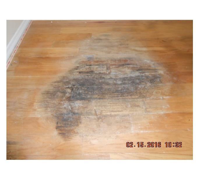Carpet Over Wood Floor No More Servpro Of North Sarasota