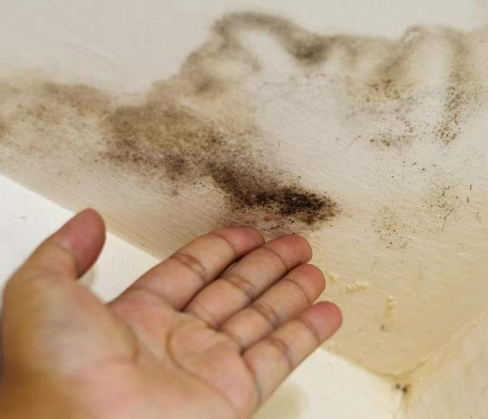 Mold Remediation Be Informed