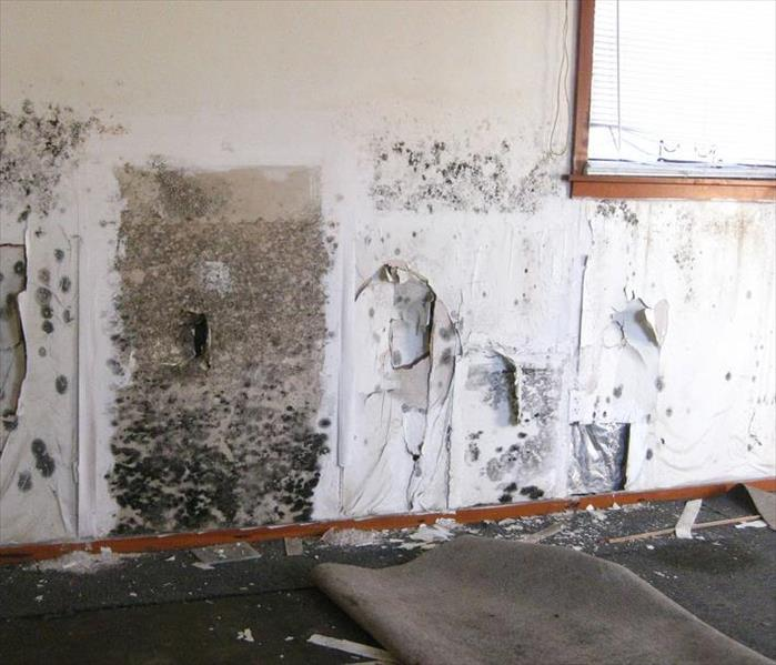 Commercial Mold Is Everywhere